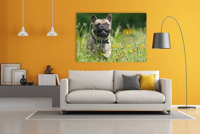 Hond op canvas